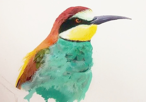 Bee-eater (WIP in gouache)
