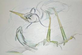 Heron and fish
