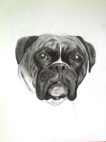 Boxer dog (pencil)