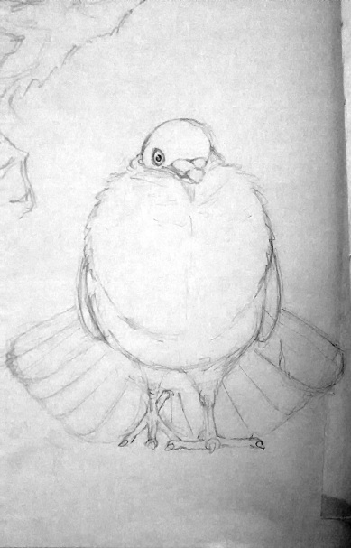 Pigeon pencil sketch for lino